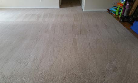Carpet Cleaning in Ann Arbor Michigan