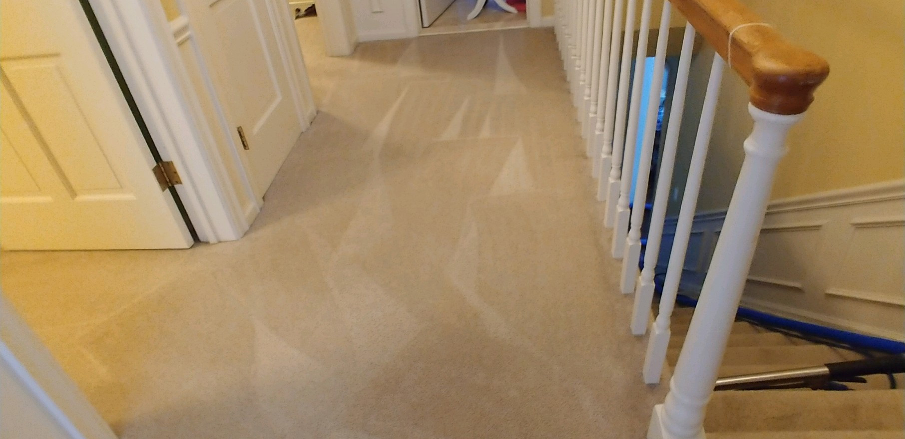 Professional Carpet Cleaning In West Bloomfield Michigan