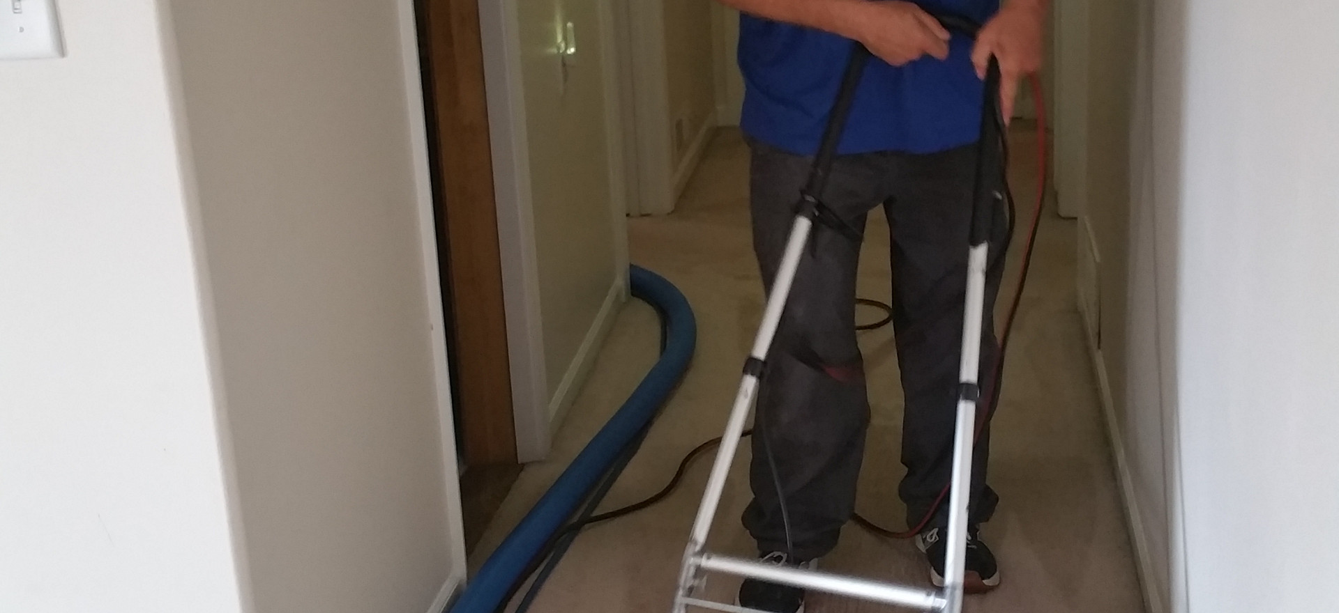 Carpet Cleaning in Canton Michigan