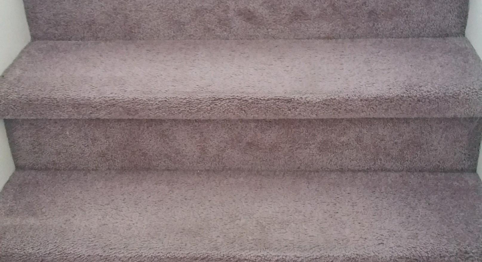 Carpet Cleaning in Wixom Michigan