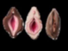 vulvas_edited_edited_edited.png
