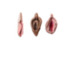 vulvas 3_edited.png