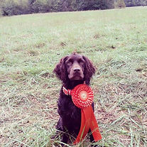 I'm so proud of my #boykinspaniel HRCH R