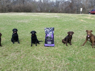 What's the best dog food for your Working Retriever?