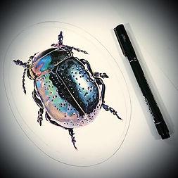 Bug-001.jpg