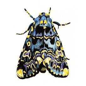 BlueandYellowRange-Bug002-400dpi-Compres