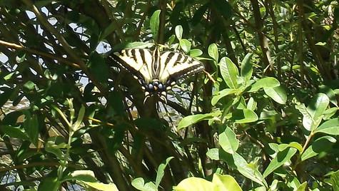 monarch butterfly yellow.jpg