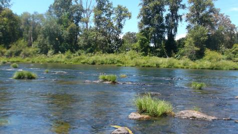 amacher park umpqua river.JPG