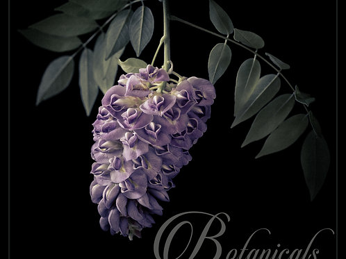 Wendy van Welie - Botanical Series 2019