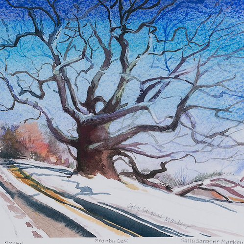 Sally Sargent Markey - Granby Oak - Giclee watercolor