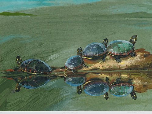 Sally Sargent Markey - Painted Turtles - Original Watercolor