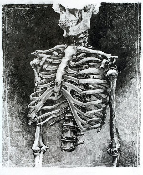 Cage - a graphite ribcage anatomy drawing by Sofiya Kuzmina
