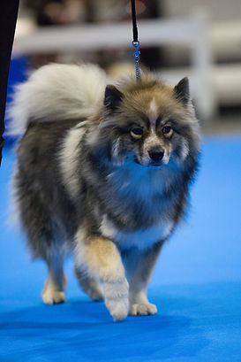 Miika-Crufts-edit.jpg