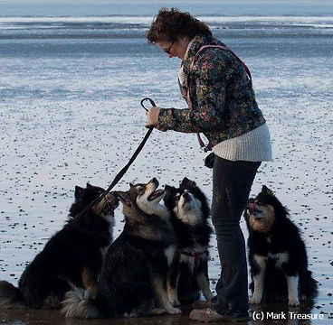 Finnish Lapphunds at the Beach