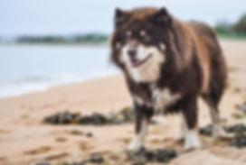 Thankfifi dog MrK at the beach