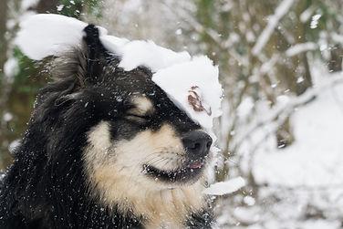 Funny snow dog