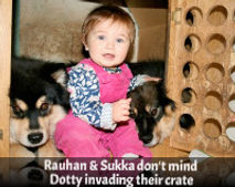 Finnish Lapphunds and children