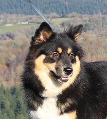Dog walking on Dartmoor