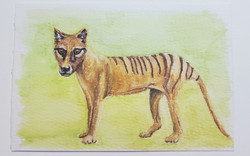 #21 Thylacine