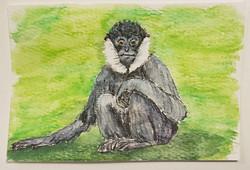 #78 Northern White-cheeked Gibbon