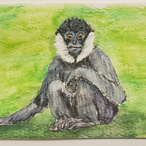 #78  Northern White-cheeked Gibbon