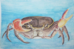 #245 Orchid Island Crab
