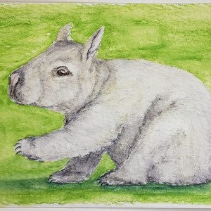 #195 Northern Hairy-nosed Wombat