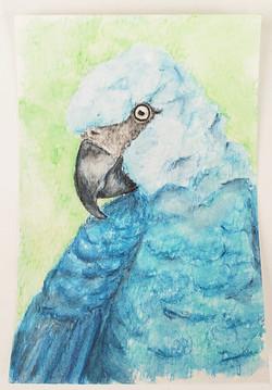 #104 Spix's Macaw
