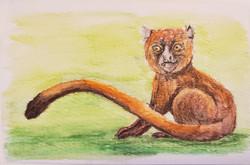 #15 Golden Bamboo Lemur