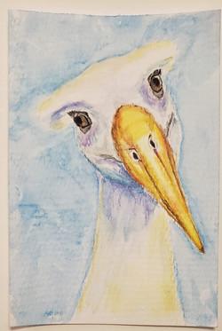 #40 Waved Albatros