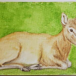 #173 Pere David's Deer