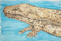 #293 Chinese Giant Salamander