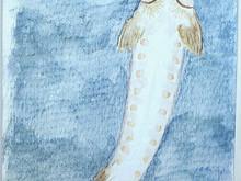 #210 European Sea Sturgeon