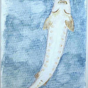 #210 European Sea Sturgeon