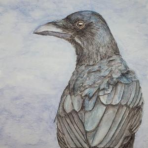 #182 Mariana Crow