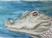 #86 Chinese Alligator