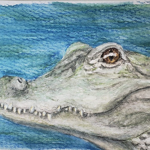 #86 Chinese Alligator