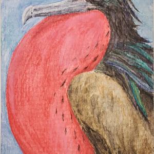 #243 Christmas Frigatebird
