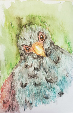 #3 Tooth-billed Pigeon