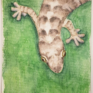 #185 Christmas Island Chained Gecko