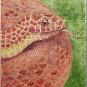 #237 Boo-Lait's Kukri Snake