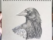 Intermission - Crows