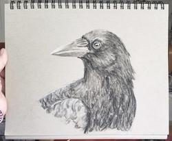 Intermission Crow