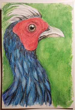 #156 Edward's Pheasant