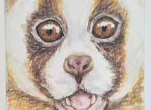 #90 Javan Slow Loris