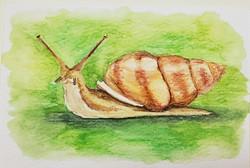 #10 Polynesian Tree Snail