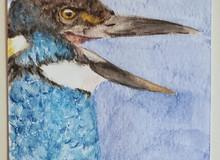 #66 Javan Blue-banded Kingfisher