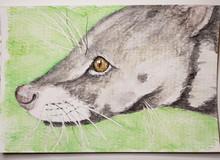 #115 Malabar Civet