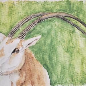 #297 Scimitar-horned Oryx