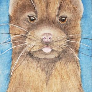 #282 Sea Mink